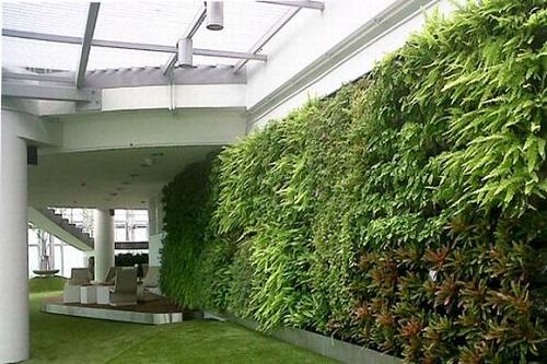 8 loại cây thích hợp cho vườn tường đứng