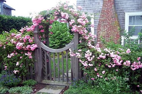 Vườn tường đứng hoa hồng đẹp mê hồn