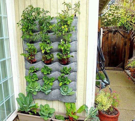 sáng tạo vườn tường đứng dùng để trồng rau ăn lá