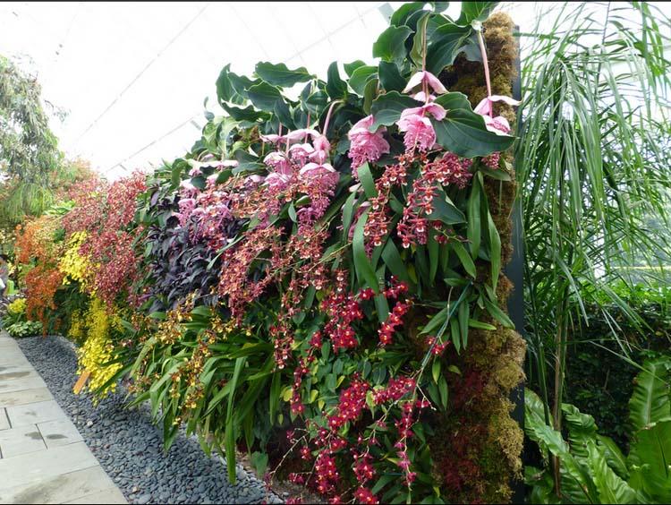 vườn tường đứng với hoa lan đẹp