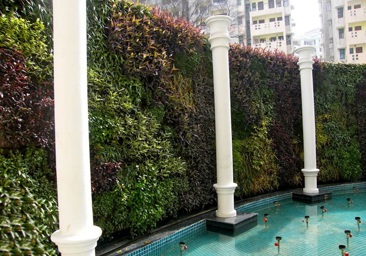 Vườn tường đứng bao quanh bể bơi