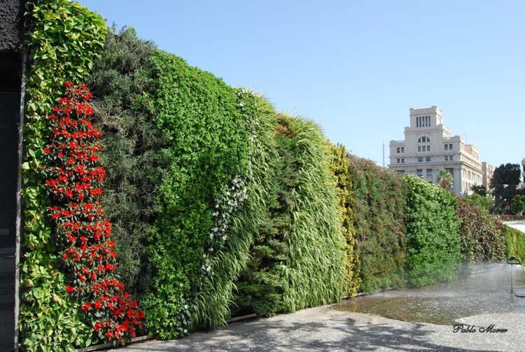 vườn tường đứng ngoài trời với diện tích lớn