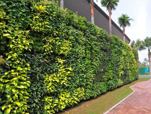 vườn tường đứng cho hành lang đô thị